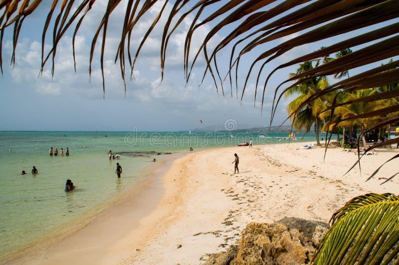 Het strand van het duifpunt in Tobago royalty-vrije stock foto's