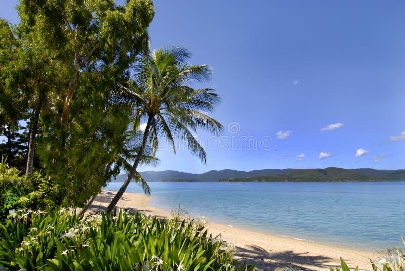 Het strand van het eiland royalty-vrije stock afbeeldingen
