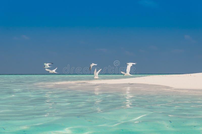 De Vogels van het strand royalty-vrije stock foto