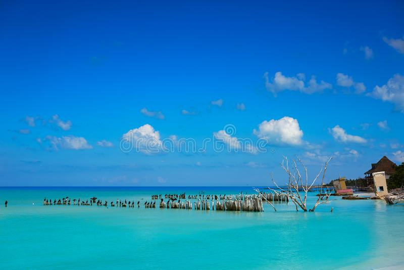 Het strand van het Holboxeiland in de zeevogels van Mexico stock afbeelding