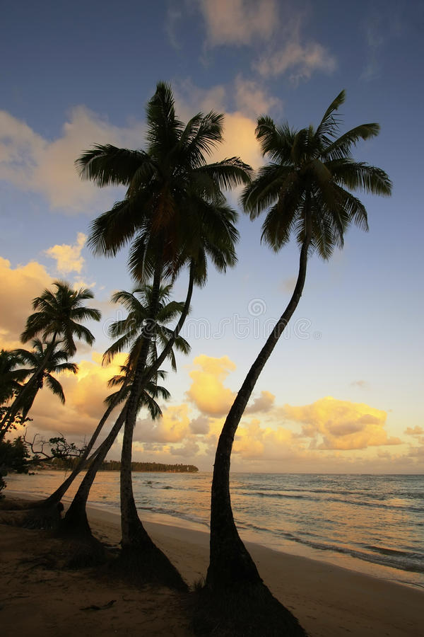 Het strand van Lasterrenas bij zonsondergang, Samana-schiereiland stock foto's