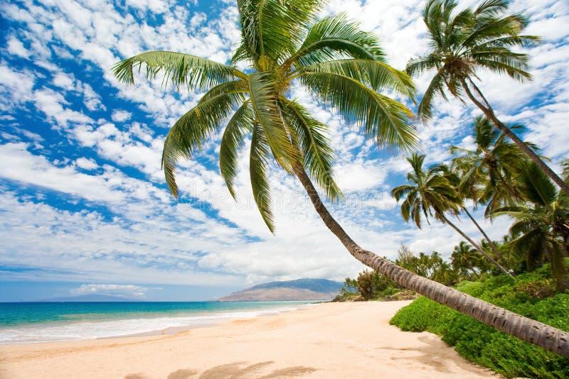 Het strand van Maui stock foto's