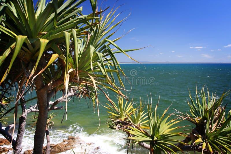 Het strand van Noosa stock afbeeldingen
