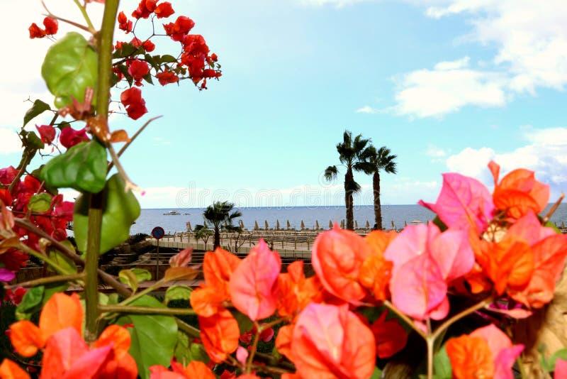 Het strand van paradijsamadores stock afbeeldingen