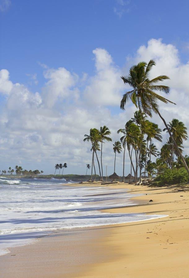 Het strand van Puntacana royalty-vrije stock fotografie