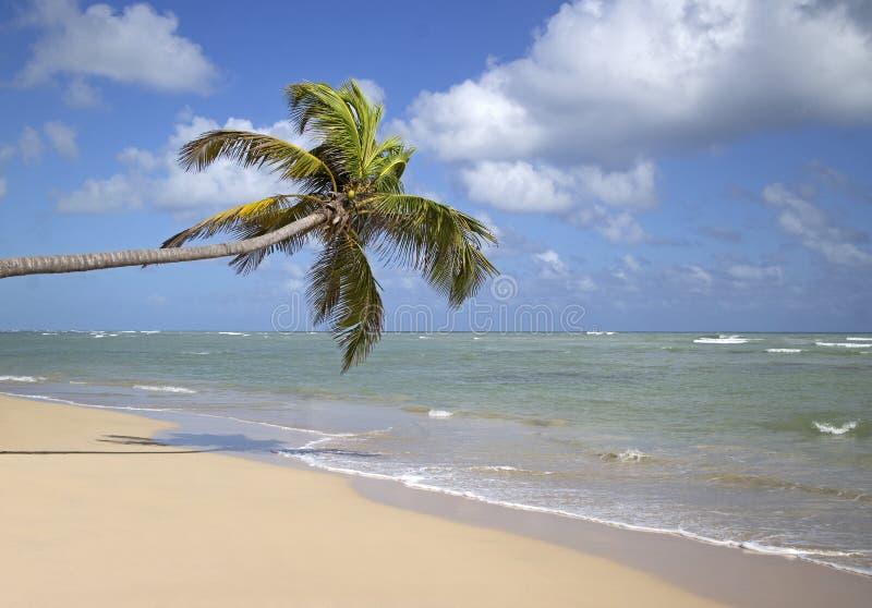 Het strand van Puntacana stock foto's