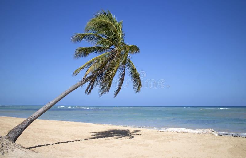 Het strand van Puntacana stock afbeeldingen