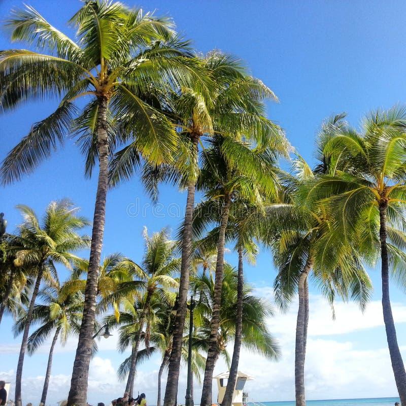 Het Strand van Waikiki royalty-vrije stock fotografie