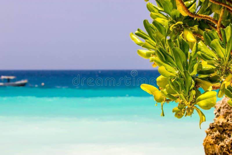 Het Strand van Zanzibar stock fotografie