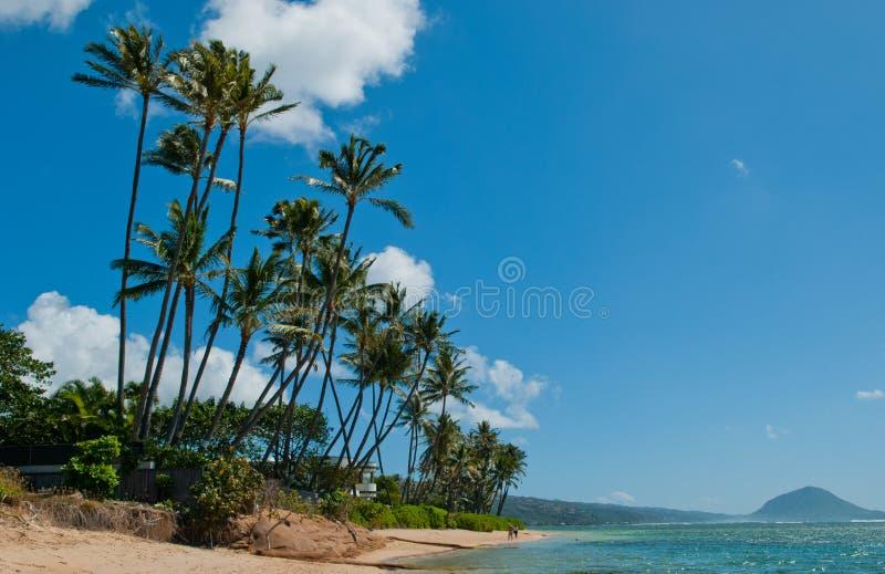 Het strandboom van Honolulu stock foto's