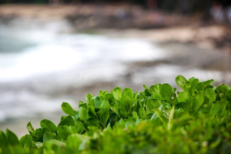 Het Strandinstallaties van Hawaï en oceaanachtergrond royalty-vrije stock afbeelding