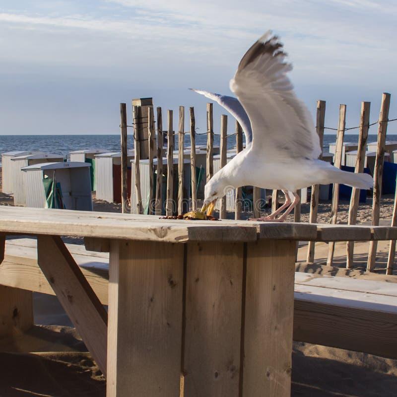 Het strandleven De zeemeeuw steelt voedsel van een lijst stock afbeeldingen