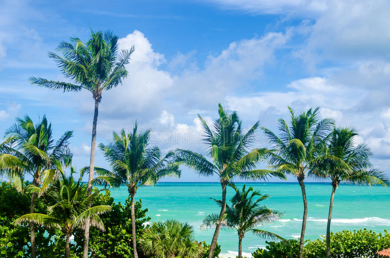 Het Strandpalmen van Miami stock foto
