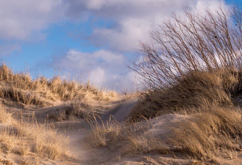 Het strandscène van Michigan met zand en strandgras royalty-vrije stock foto's