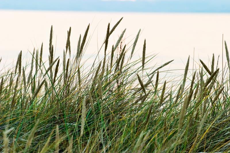 Het stro van het gras royalty-vrije stock foto
