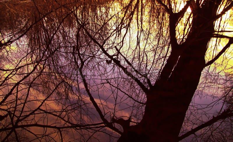 Het struikgewas van bos en de mist wordt verlicht door zon, heldere zonnen stock foto
