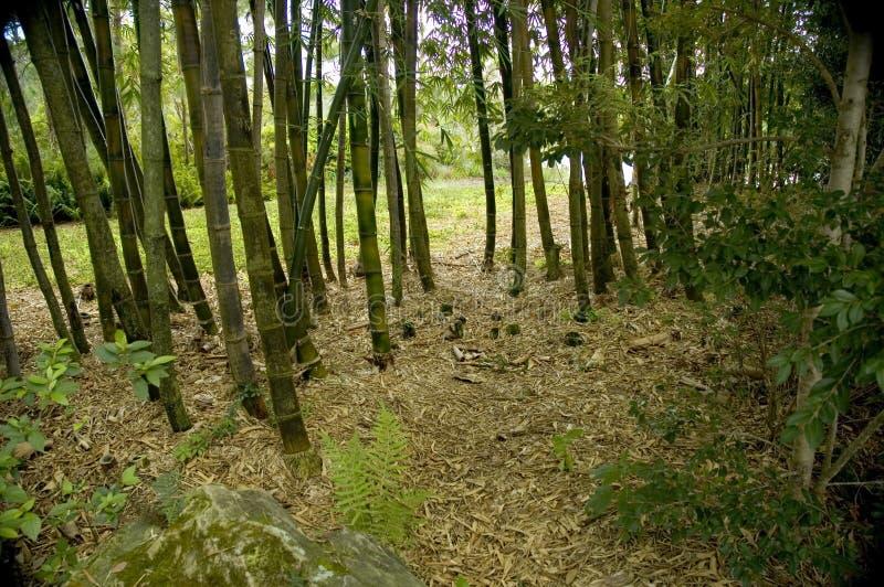 Het struikgewas van het bamboe. royalty-vrije stock afbeelding