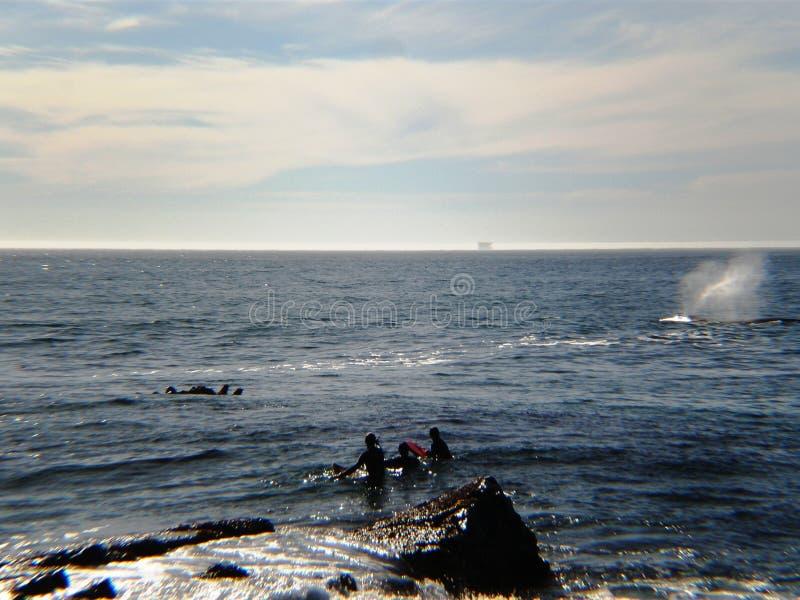 Het surfen met de walvis stock afbeeldingen