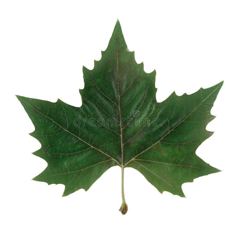 Het symbool van Canada stock afbeeldingen