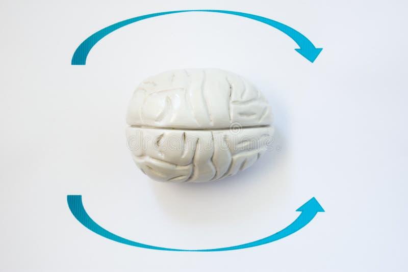 Het symptoom van Duizeligheid of hoofd spint fotoconcept De vorm van menselijke hersenen ligt omringd door pijlen die op richting stock afbeelding