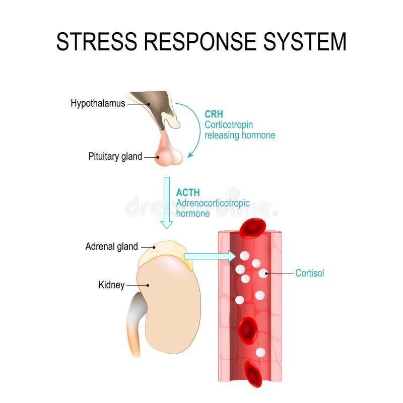 Het systeem van de spanningsreactie vector illustratie
