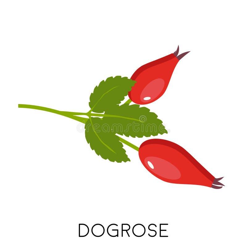 Het takje van rozebottelbessen met bladeren vlak die pictogram op witte achtergrond wordt geïsoleerd dogrose of wildrose met peul royalty-vrije illustratie
