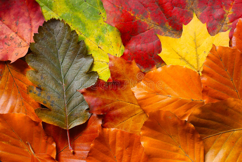 Het tapijt van de herfst royalty-vrije stock afbeeldingen