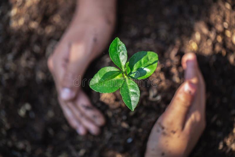 Het het Teamwerk die van de jeugdhanden jong boompjeboom beschermen die en op land planten voor vermindert globale verwarmende aa stock foto's