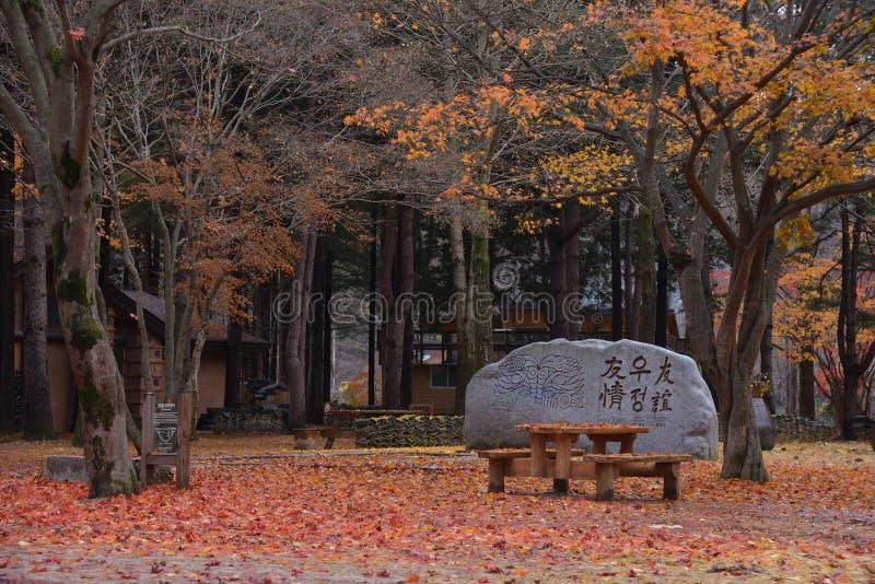 Het teken van de de esdoornrots van Korea van het Namisumeiland stock foto's