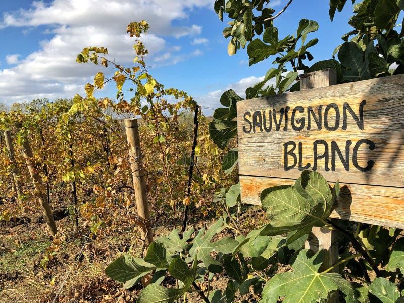 Het teken van Sauvignon blanc in een wijngaard royalty-vrije stock foto