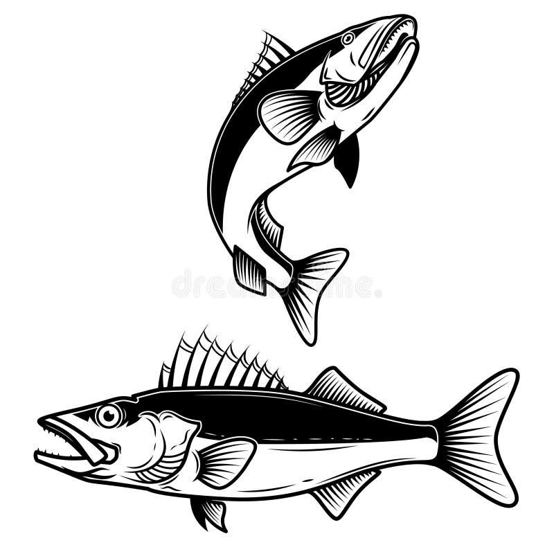 Het teken van snoekbaarzenvissen op witte achtergrond Zander visserij Ontwerpelement voor embleem, etiket, embleem, teken stock illustratie