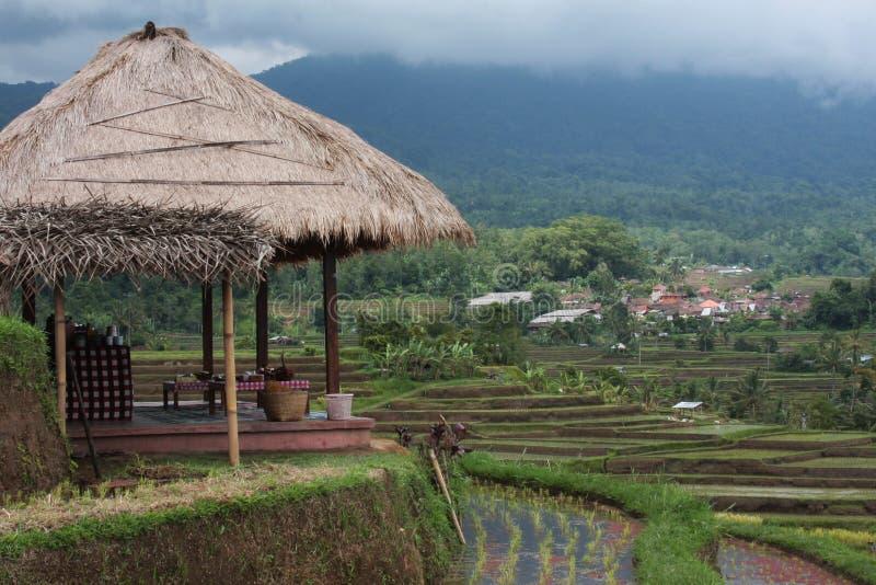 Het terras van de rijst. royalty-vrije stock afbeelding