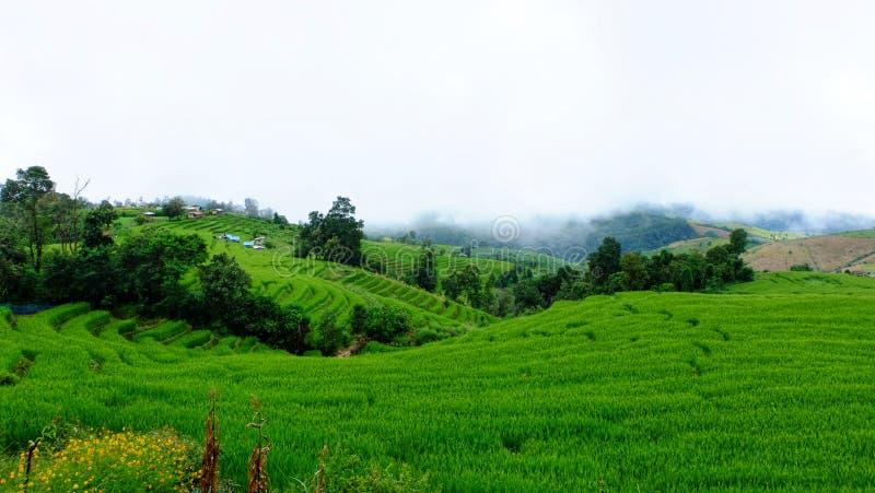 Het terras van de rijst Gefotografeerd op Bali stock afbeeldingen