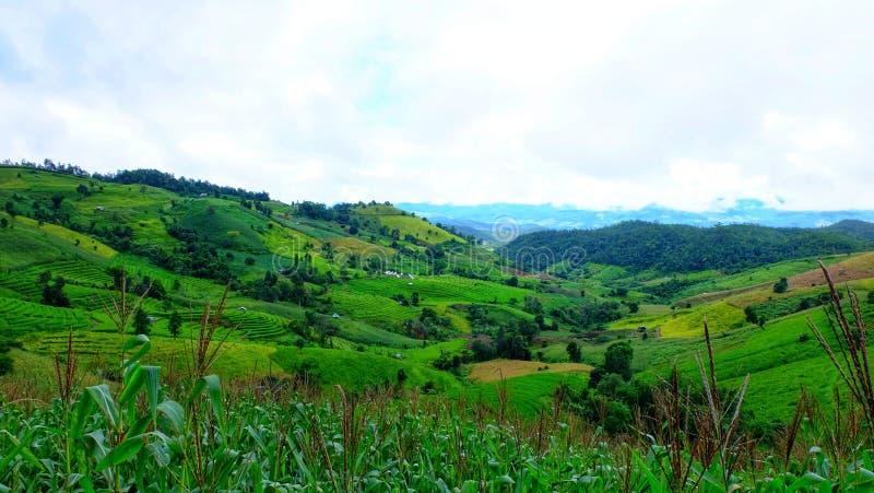 Het terras van de rijst Gefotografeerd op Bali royalty-vrije stock foto