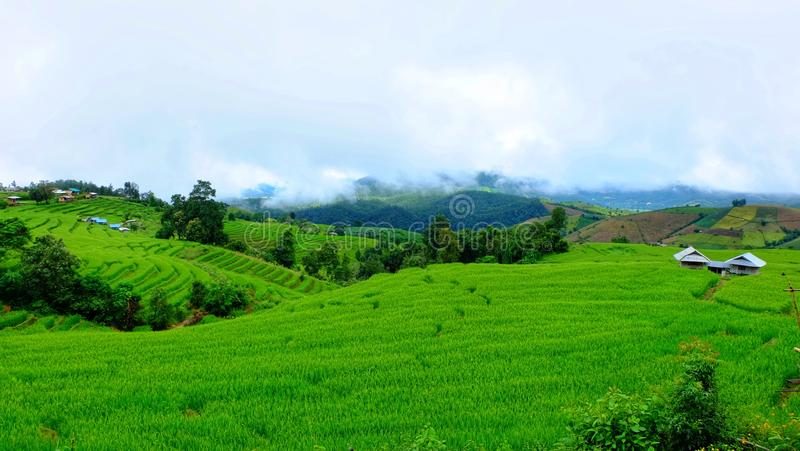 Het terras van de rijst Gefotografeerd op Bali royalty-vrije stock fotografie