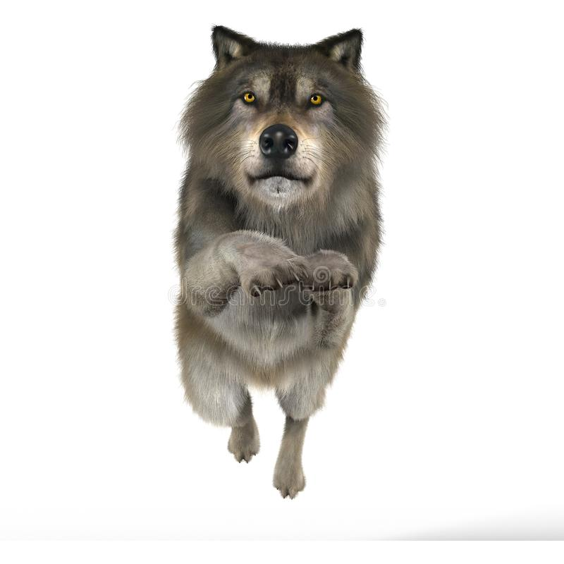 Het teruggeven van Wolf Leaping stock illustratie
