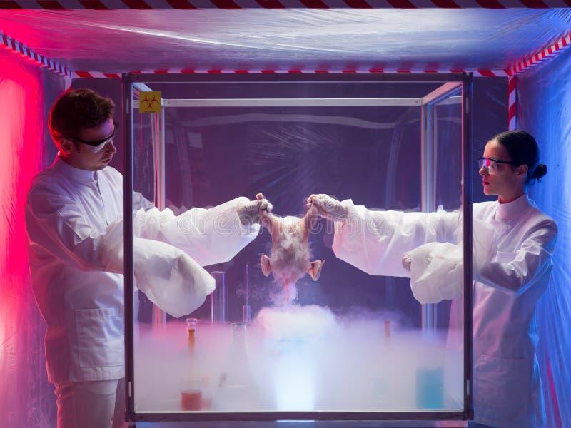 Het testen van een vogelkarkas in een laboratorium stock foto