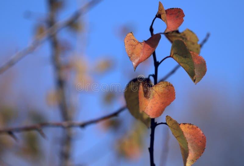 Het Thema van de herfst Een regenjas, Paraplu, Rubberlaarzen Een tak met rode bladeren op een zonnige dag tegen een blauwe hemel royalty-vrije stock afbeelding