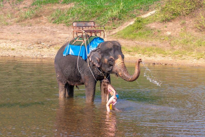 Het tienermeisje wast een olifant het meisje met de olifant in het water een olifant zwemt met een meisje stock foto