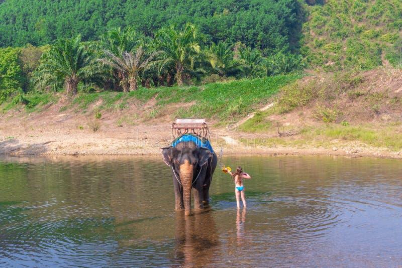 Het tienermeisje wast een olifant het meisje met de olifant in het water een olifant zwemt met een gir royalty-vrije stock afbeeldingen