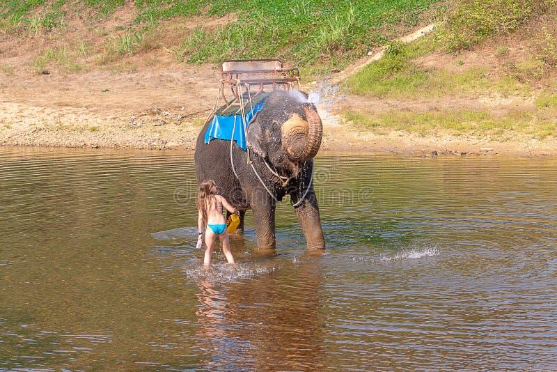 Het tienermeisje wast een olifant met een borstel het meisje met de olifant in het water Een olifant bespat water royalty-vrije stock fotografie