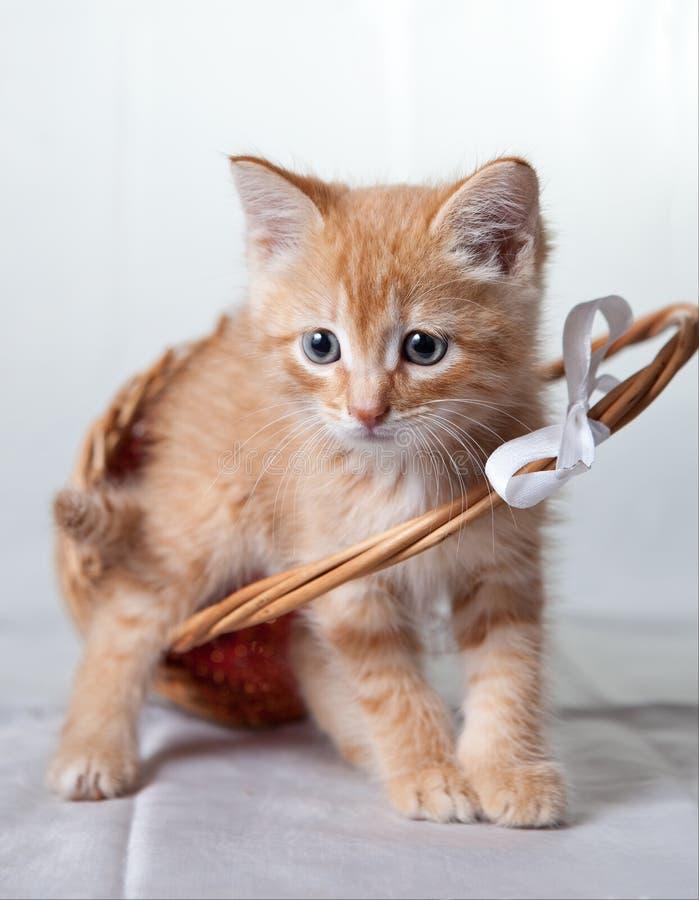 Het tijger-katje van de gember met een mand stock fotografie
