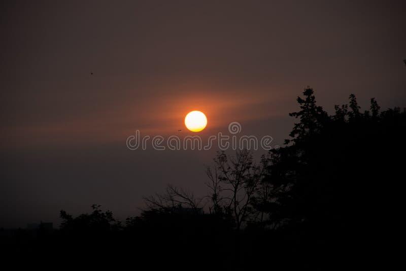 Het toenemen maan in een verdonkerende hemel die takken van pijnboom silhouetteren stock afbeelding