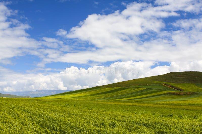 Download Het Toerisme Van China Qinghai Stock Foto - Afbeelding bestaande uit achtergrond, mooi: 39115320