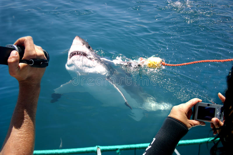 Het toerisme van de haai stock fotografie
