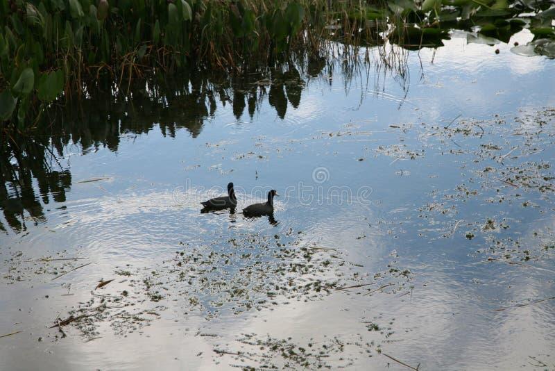 Het Toevluchtsoord van het moerasland en van het Wild royalty-vrije stock afbeeldingen