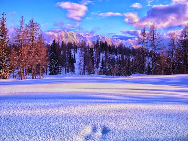 Het toneeldielandschap van de bergwinter met voetafdrukken met verse sneeuw worden behandeld royalty-vrije stock afbeeldingen