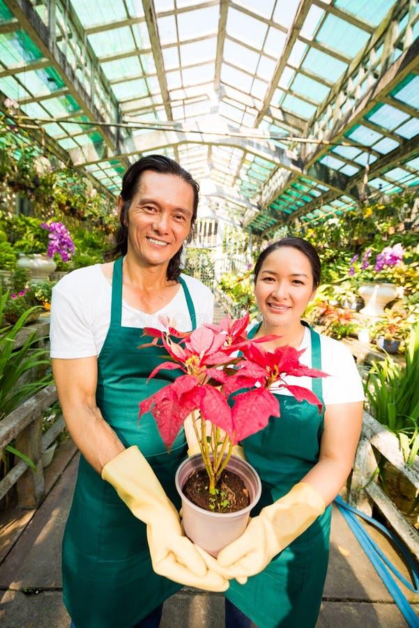 Het tonen van bloeiende bloem royalty-vrije stock foto