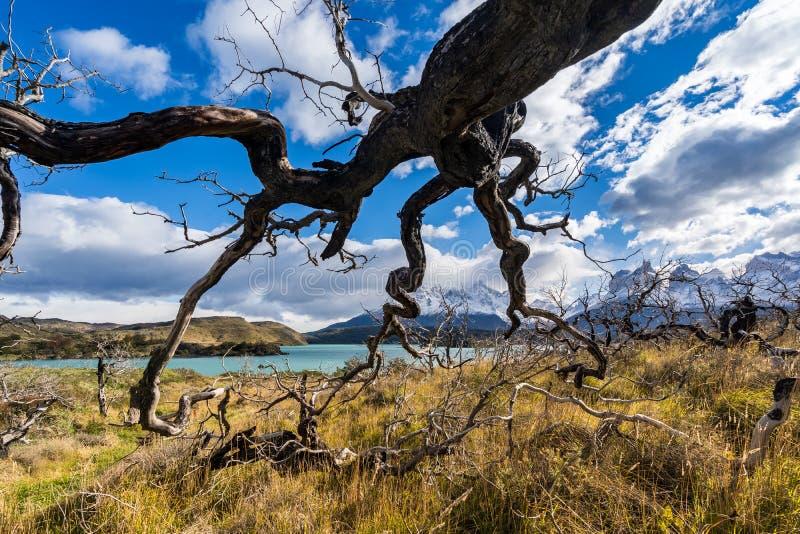 In het Torres del Paine nationale park, Patagoni?, Chili, Lago del Pehoe royalty-vrije stock afbeeldingen