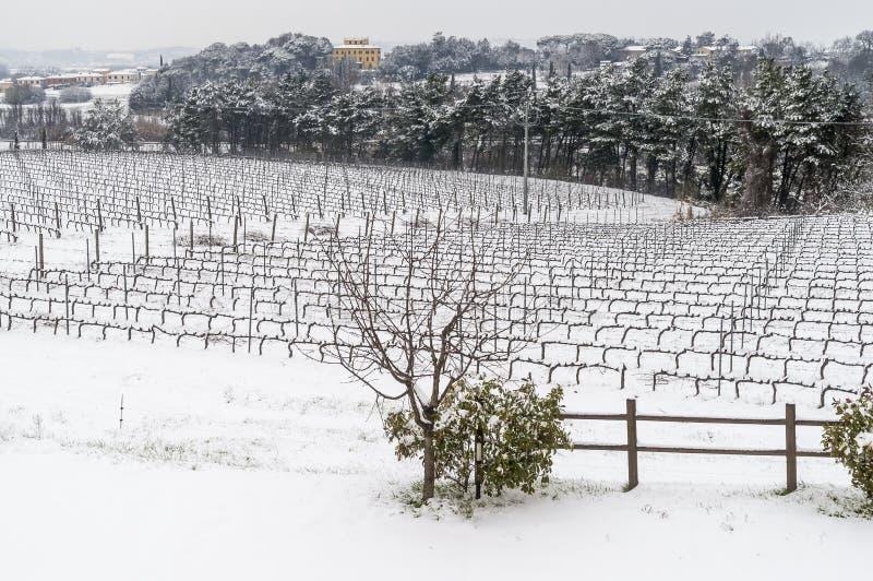 Het Toscaanse die platteland en de wijngaarden door sneeuw, Pisa, Toscanië, Italië wordt behandeld royalty-vrije stock foto